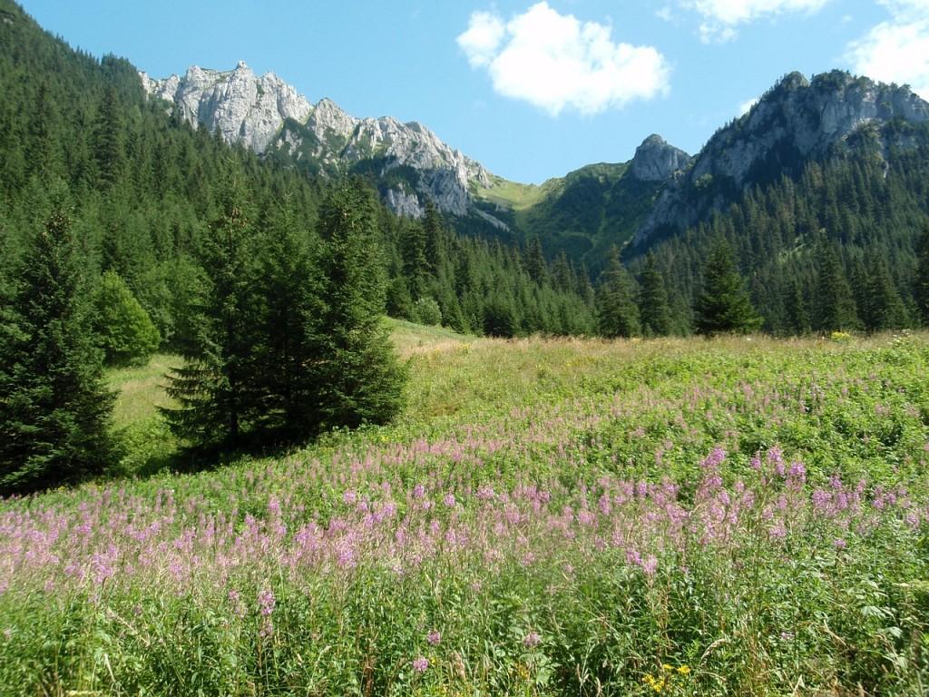 Dolina Kościeliska w polskich Tatrach